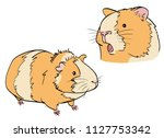 two cavys in color on white...