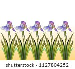 a row of delicate irises in... | Shutterstock .eps vector #1127804252