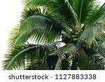 coconut tree in the jungle near ... | Shutterstock . vector #1127883338