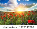 spring blooming of poppies field | Shutterstock . vector #1127917808