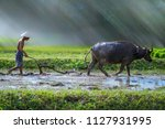 farmer using buffalo plowing... | Shutterstock . vector #1127931995