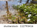 morning glory and the river in the nature - stock photo