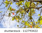 green leaves and tree branches in the nature - stock photo