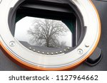 Sensor of a mirrorless full-frame camera in a housing with a photo of a tree mounted in the fog on the sensor surface.