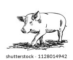 sketch of pig  hand drawn...   Shutterstock .eps vector #1128014942