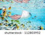 Colorful Fish  Stingray And...