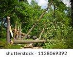 tree broken by storm on dirt... | Shutterstock . vector #1128069392