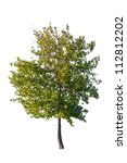tree isolated on a white...   Shutterstock . vector #112812202