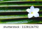 Stock photo white flower on coconut leaf 1128126752