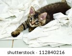 Stock photo kitten playing with toilet paper 112840216