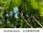 bird in tree | Shutterstock . vector #1128483338
