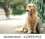 cute golden retriever sitting... | Shutterstock . vector #1128551912