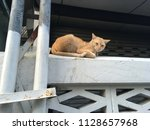 a orange cat sitting on a fence ... | Shutterstock . vector #1128657968