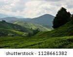 cameron highlands  malaysia  ... | Shutterstock . vector #1128661382