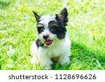 puppy purebred black and white... | Shutterstock . vector #1128696626