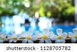 fresh white frangipani plumeria ... | Shutterstock . vector #1128705782