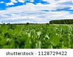 clover meadow close up | Shutterstock . vector #1128729422