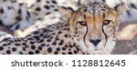 female cheetah in the naukluft... | Shutterstock . vector #1128812645