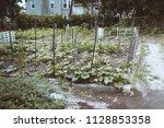 community gardens and urban... | Shutterstock . vector #1128853358
