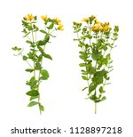 plants on a white background... | Shutterstock . vector #1128897218