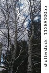 tall tree. birch. withered tree. | Shutterstock . vector #1128910055