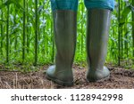 rubber boots for agriculture.... | Shutterstock . vector #1128942998