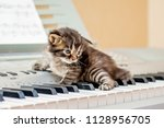 A Small Striped Kitten On The...
