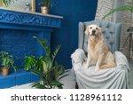 golden retriever puppy dog on... | Shutterstock . vector #1128961112