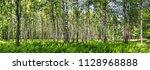 birch grove on a sunny summer... | Shutterstock . vector #1128968888