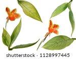 tropical garden landscaping... | Shutterstock . vector #1128997445
