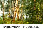 strong beautiful fog and... | Shutterstock . vector #1129080002