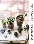 succulent plants for house... | Shutterstock . vector #1129092182