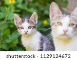 cat family portrait | Shutterstock . vector #1129124672