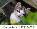 cute kitten in summer | Shutterstock . vector #1129124696