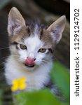 cute kitten in summer | Shutterstock . vector #1129124702