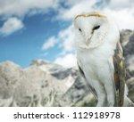 Beautiful Barn Owl In To The...