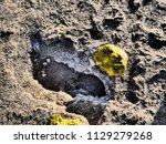 close up picture of a geyser... | Shutterstock . vector #1129279268