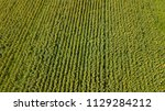 aerial view of cultivated... | Shutterstock . vector #1129284212