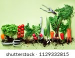 organic vegetables and garden... | Shutterstock . vector #1129332815
