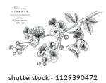 sketch floral botany collection.... | Shutterstock .eps vector #1129390472