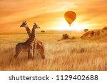giraffes in the african savanna ...   Shutterstock . vector #1129402688