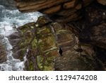 puffin sitting on brown cliffs... | Shutterstock . vector #1129474208