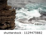 puffin sitting on brown cliffs... | Shutterstock . vector #1129475882