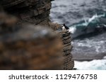 puffins sitting on brown cliffs ... | Shutterstock . vector #1129476758