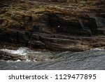 brown cliffs of a rocky coast... | Shutterstock . vector #1129477895