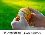 orange  citrus in hand | Shutterstock . vector #1129485908