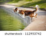 Dog Jumps Into The Water From...