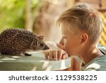 Child with pet. Boy and hedgehog looking at each other.
