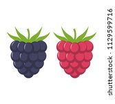blackberry and raspberry with... | Shutterstock .eps vector #1129599716