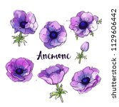 ink  pencil  watercolor anemone ... | Shutterstock .eps vector #1129606442